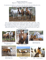 Placitas Horses for Adoption