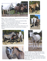 Flyer of Horses for Adoption